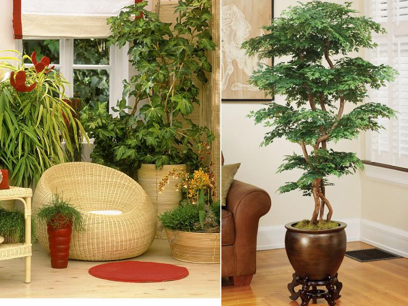 Какие растения должны быть в квартире по фен шуй, цветов для